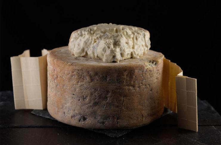 caratteristica crosta del Gorgonzola