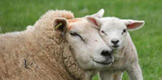 Non è giusto mangiare gli animali. E chi lo dice!?
