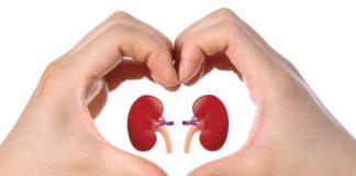 Depuriamo il nostro corpo: i reni