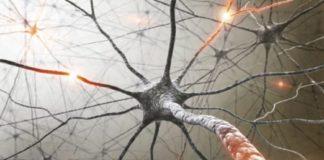 i neuroni spegni-fame