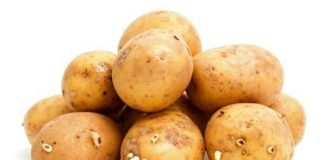Scopri quando le patate con germogli non si possono mangiare perché tossiche