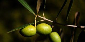olio extravergine di oliva estratto a freddo,