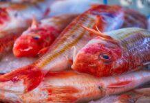 pesce triglia